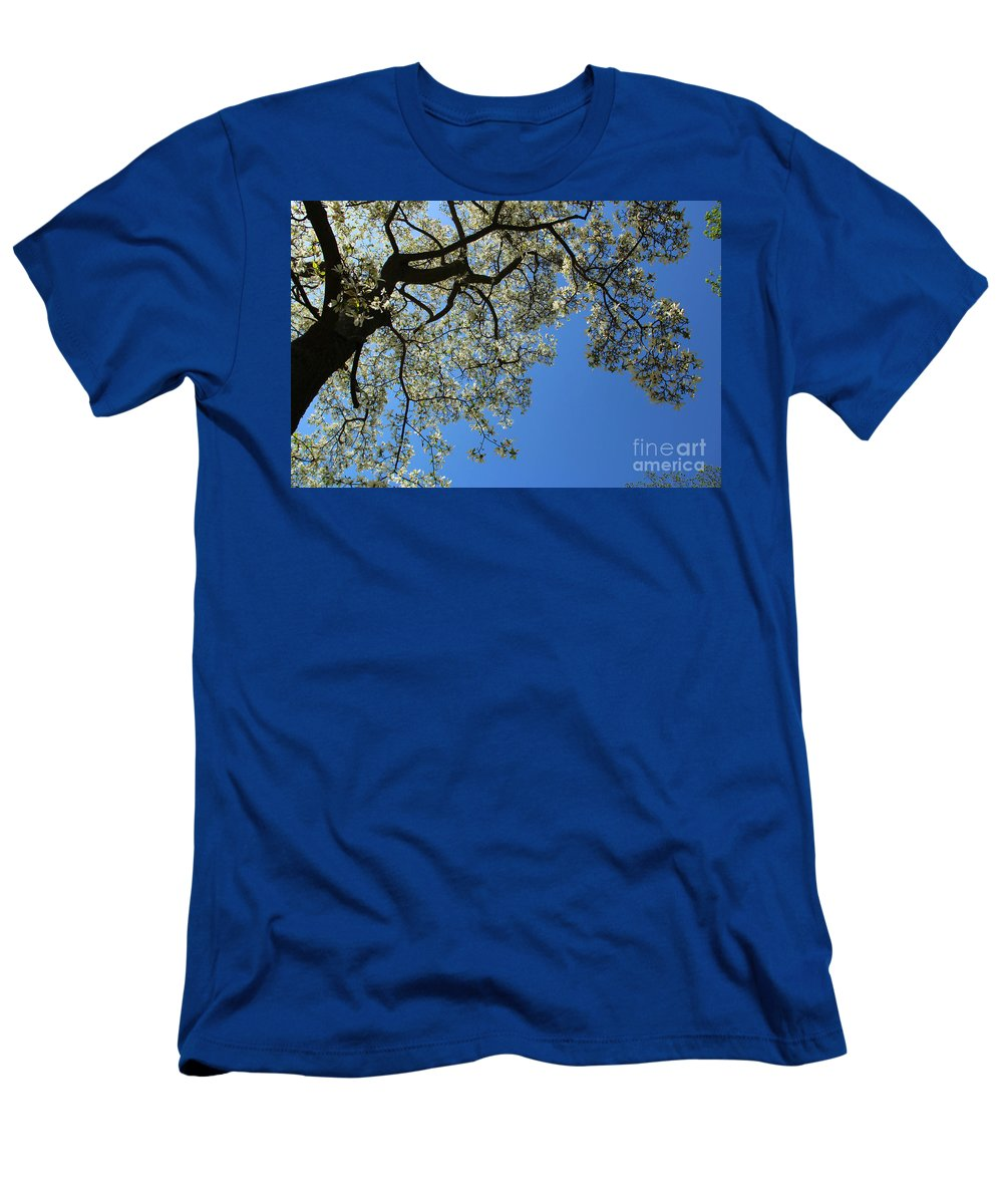 Magnolia Men's T-Shirt (Athletic Fit) featuring the photograph Blossoming White Magnolia Tree Against Blue Sky by Kerstin Ivarsson