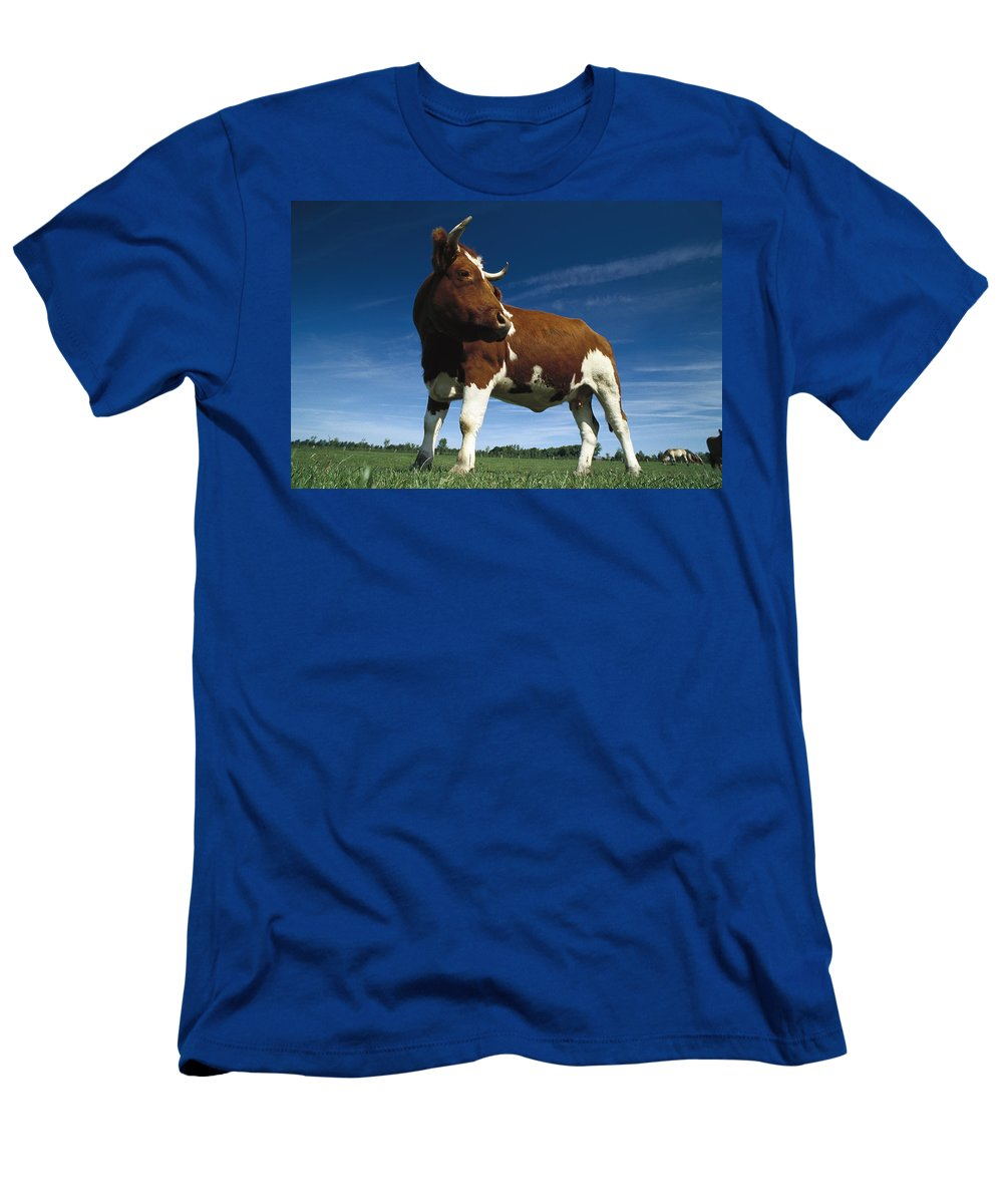 Feb0514 Men's T-Shirt (Athletic Fit) featuring the photograph Cow Standing In Field Germany by Heidi & Hans-Juergen Koch