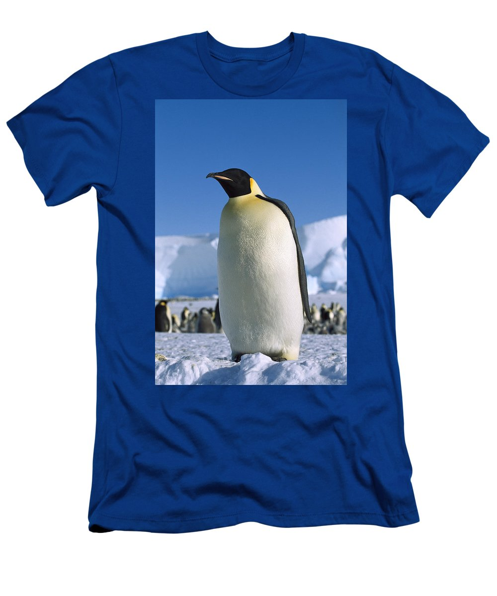 Feb0514 Men's T-Shirt (Athletic Fit) featuring the photograph Emperor Penguin Portrait Antarctica by Konrad Wothe