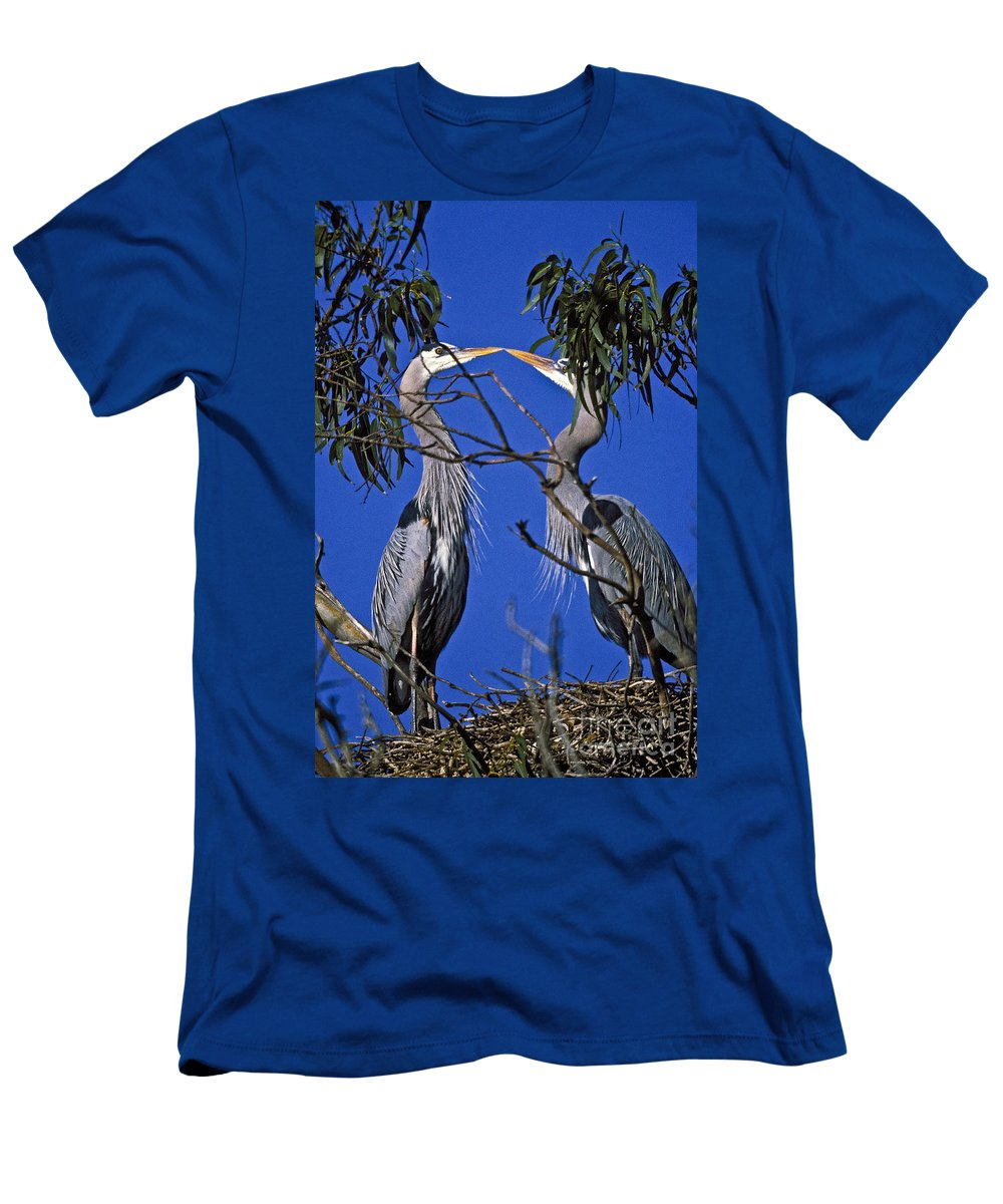 Great Blue Herons Men's T-Shirt (Athletic Fit) featuring the photograph Great Blue Herons by Howard Stapleton