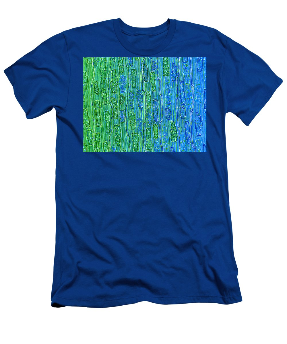 Migliore Men's T-Shirt (Athletic Fit) featuring the drawing Grooblee Grove by Dave Migliore