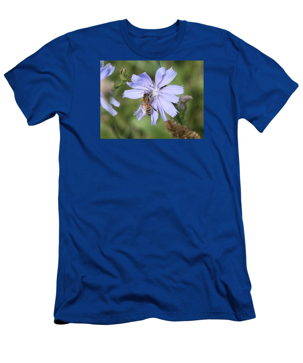 Honeybee Men's T-Shirt (Athletic Fit) featuring the photograph Honeybee On Chicory by Lucinda VanVleck