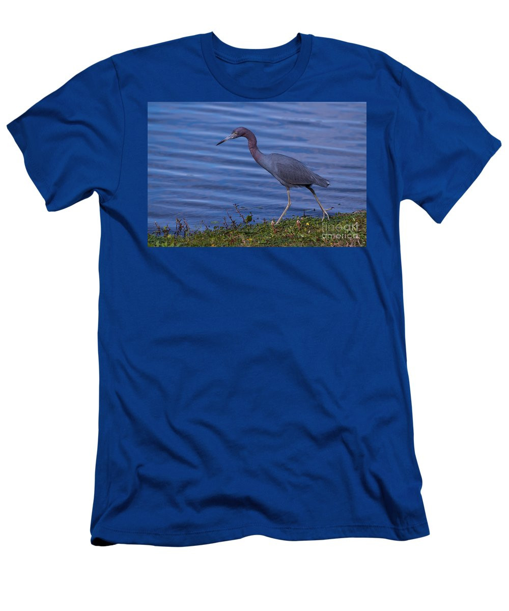 Little Men's T-Shirt (Athletic Fit) featuring the photograph Little Blue Strut by Photos By Cassandra