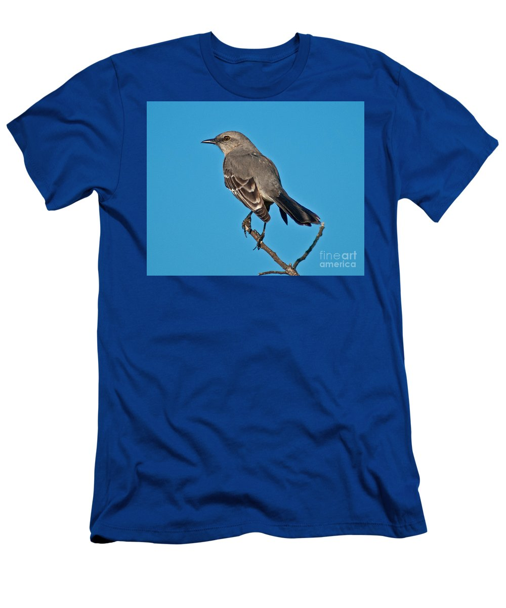 Florida Men's T-Shirt (Athletic Fit) featuring the photograph Mockingbird by Stephen Whalen