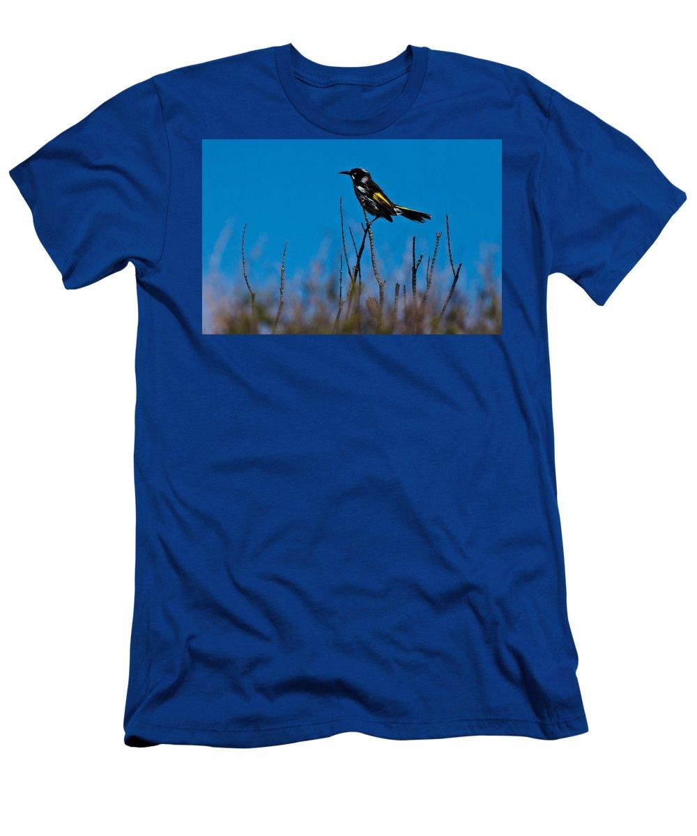 New Holland Honeyeater Men's T-Shirt (Athletic Fit) featuring the photograph New Holland Honeyeater by Miroslava Jurcik