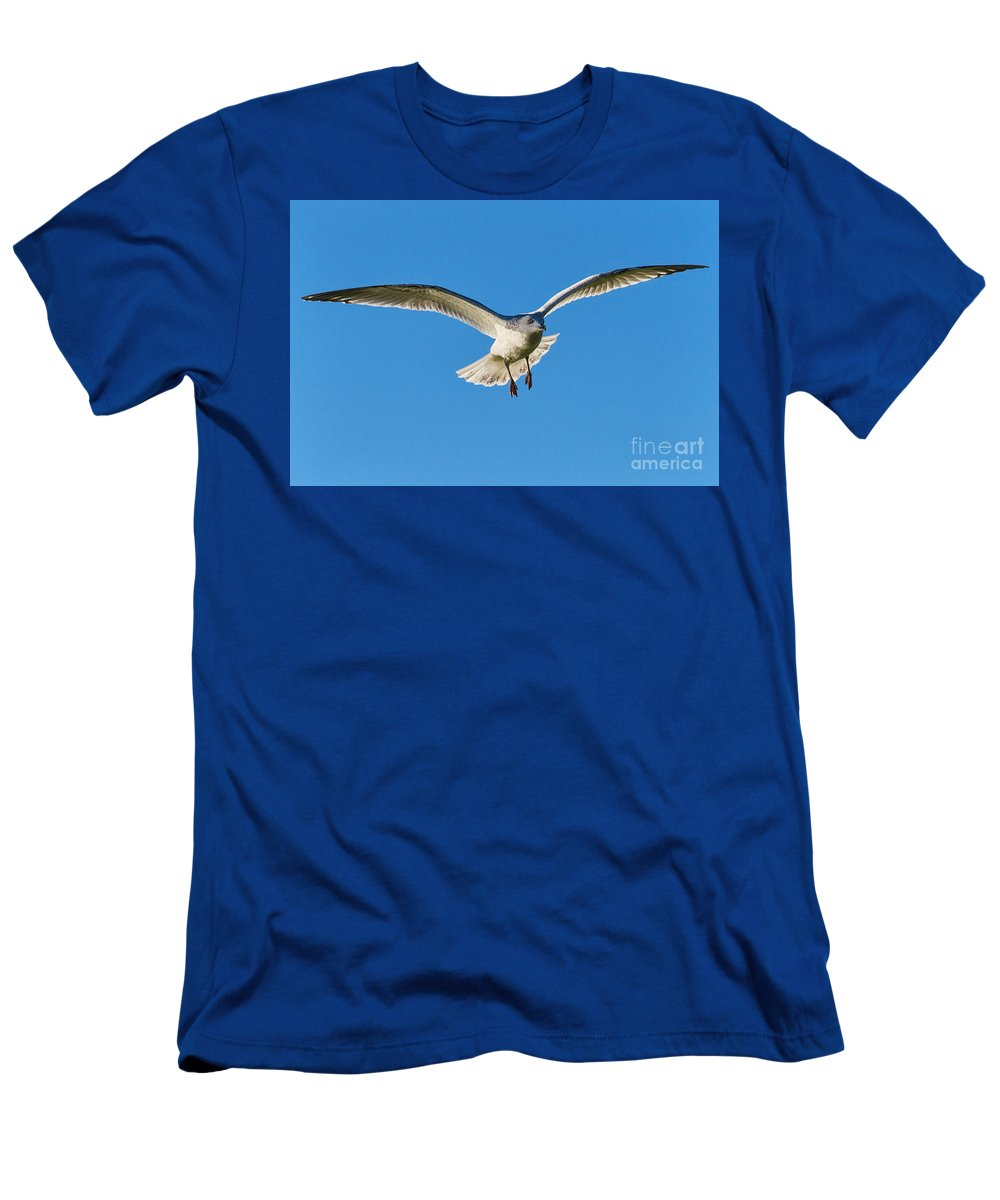 Gull Men's T-Shirt (Athletic Fit) featuring the photograph Soaring by Susie Peek