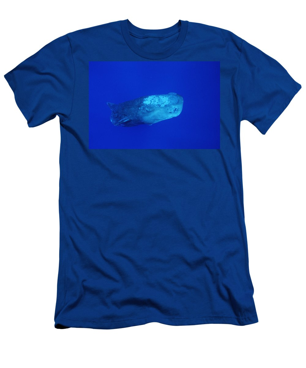 Feb0514 Men's T-Shirt (Athletic Fit) featuring the photograph Sperm Whale With Remoras by Flip Nicklin