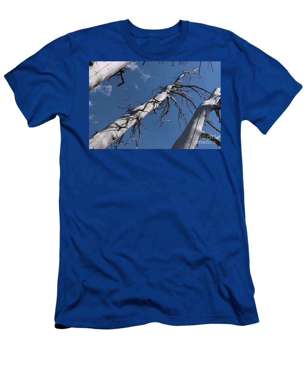 Dead Tree Men's T-Shirt (Athletic Fit) featuring the photograph Three Gray Trees by Robin Maria Pedrero