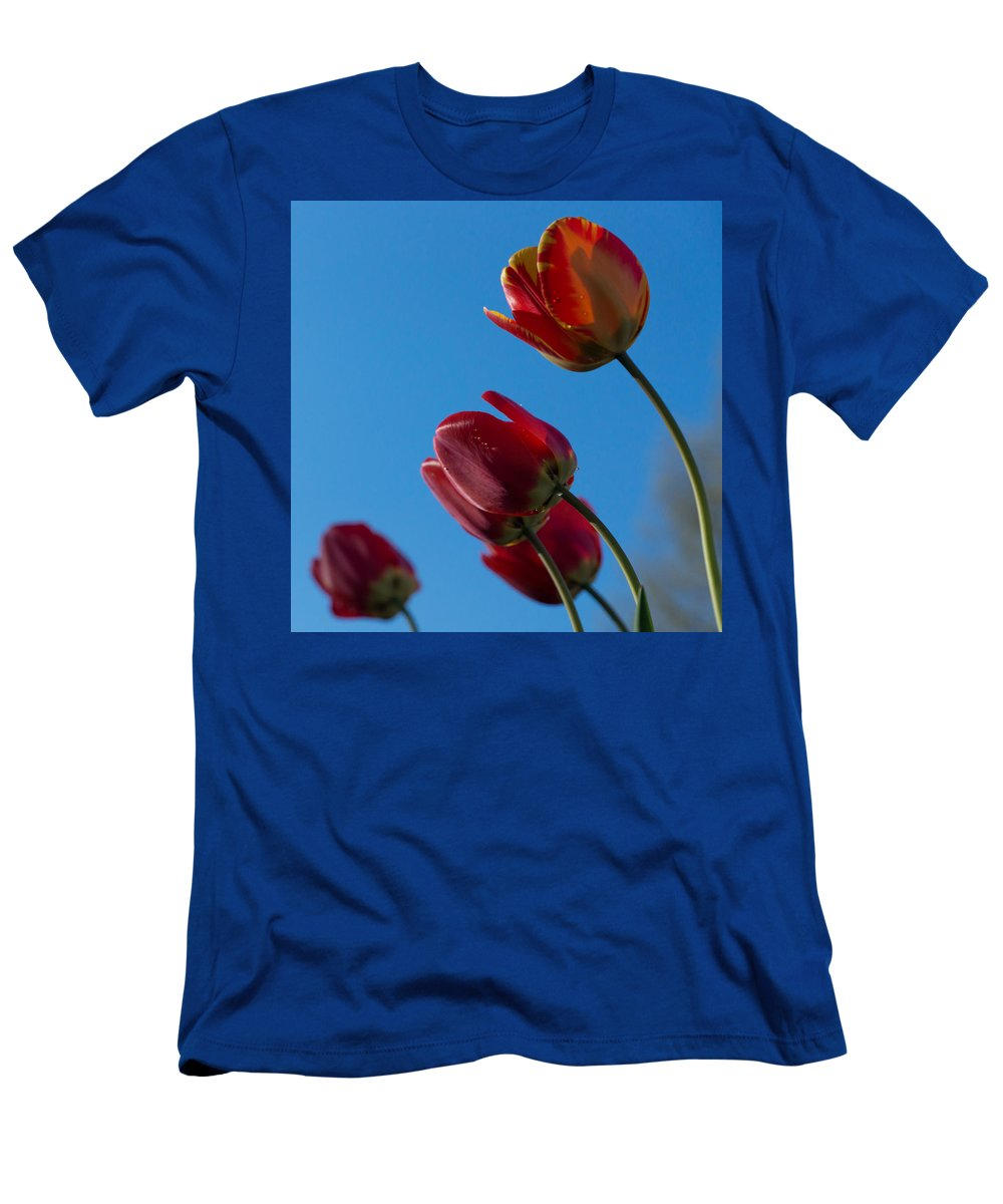 Tulip Men's T-Shirt (Athletic Fit) featuring the photograph Tulips On Blue by Photographic Arts And Design Studio