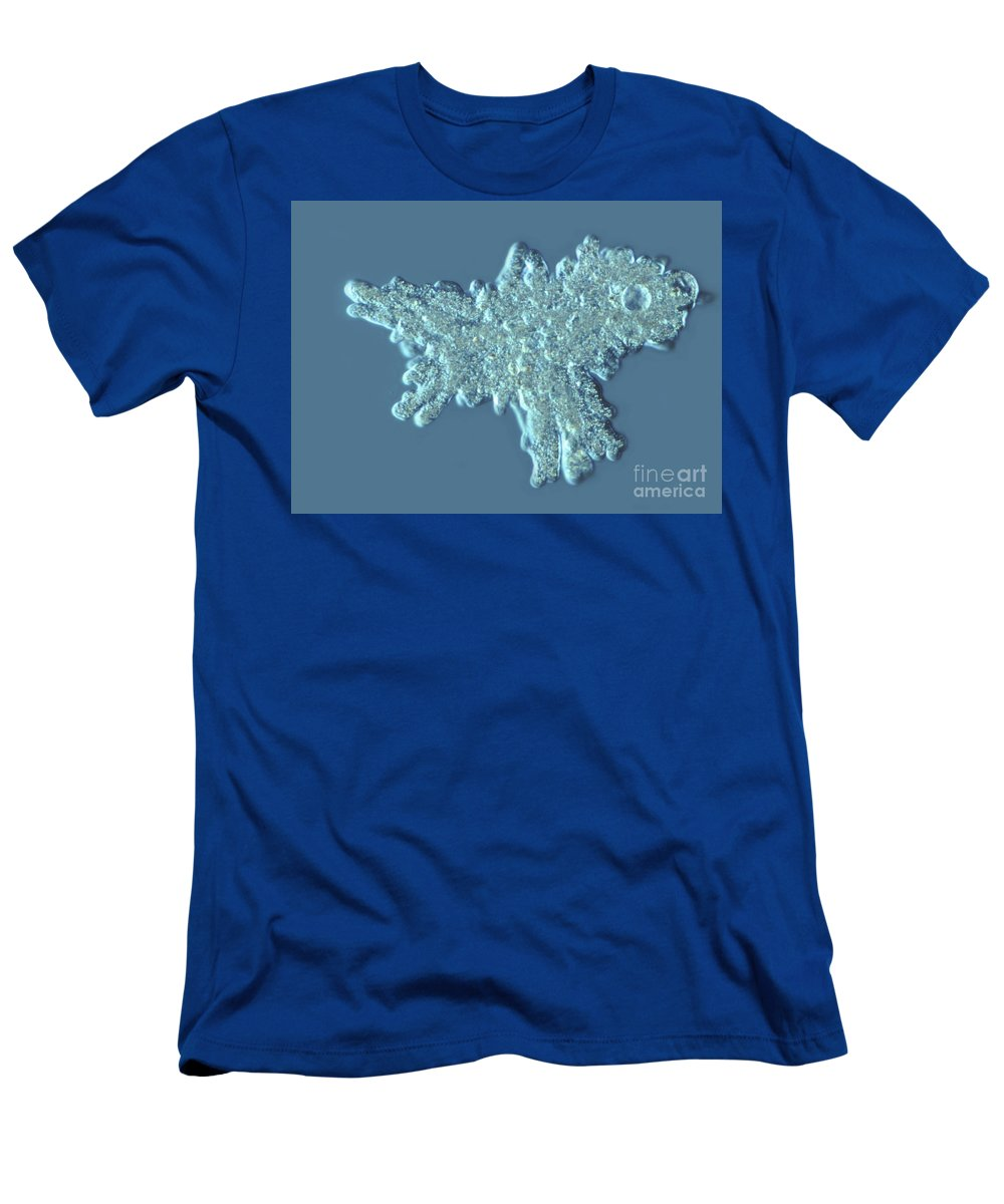 Light Microscopy Men's T-Shirt (Athletic Fit) featuring the photograph Amoeba Proteus by M. I. Walker