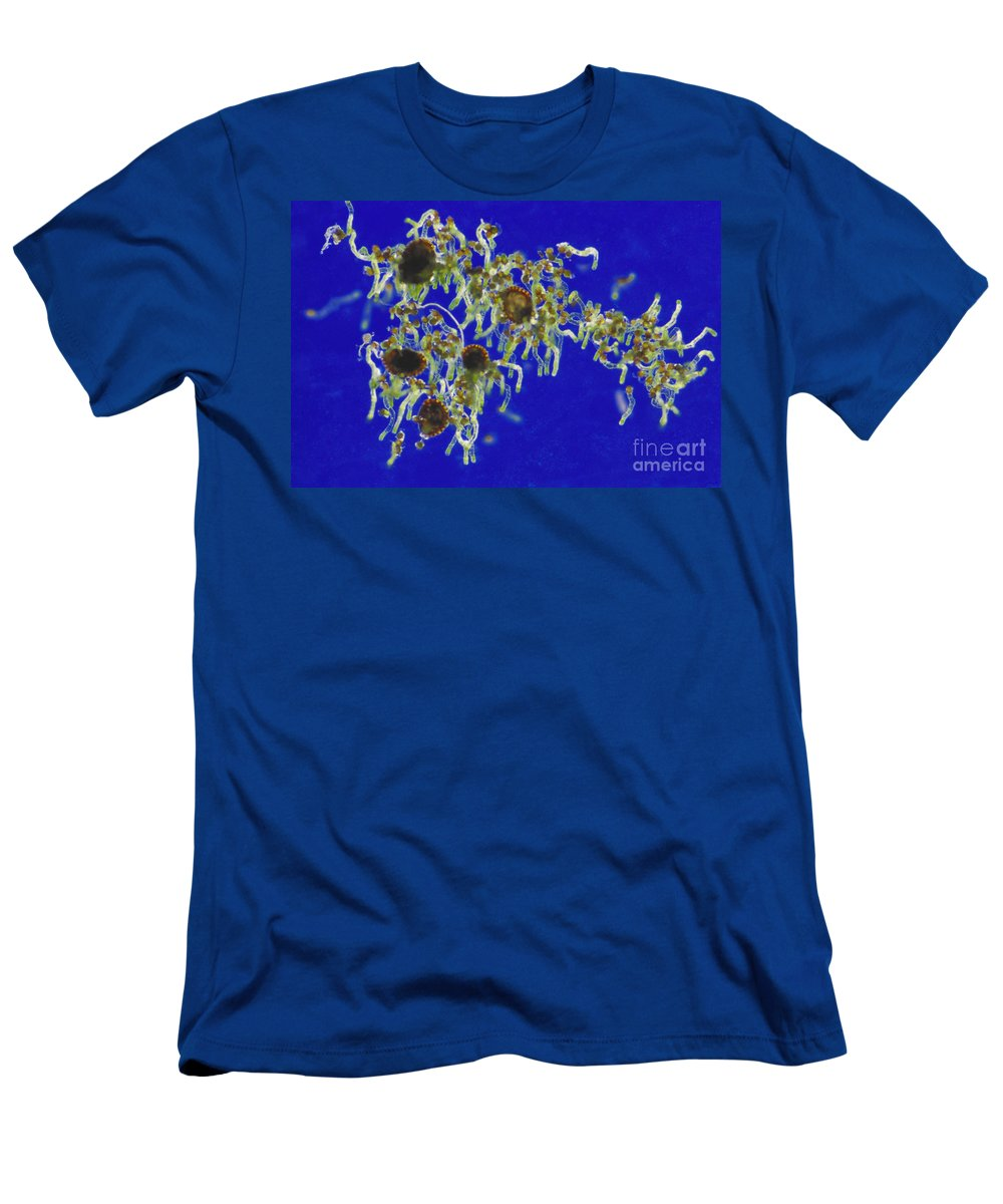 Plant Men's T-Shirt (Athletic Fit) featuring the photograph Germinating Fern Spores by M. I. Walker
