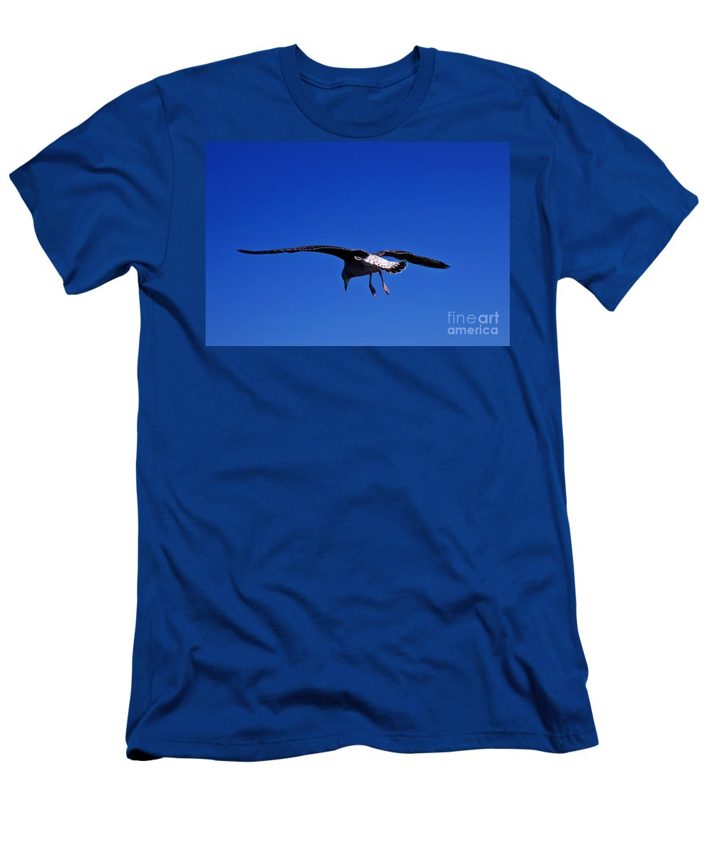 Animal Men's T-Shirt (Athletic Fit) featuring the photograph Seagull In Flight by John Greim