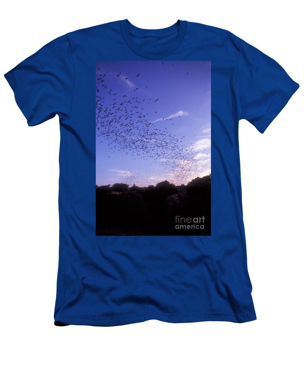 Mexican Freetail Bat Men's T-Shirt (Athletic Fit) featuring the photograph Mexican Freetail Bats by Dante Fenolio