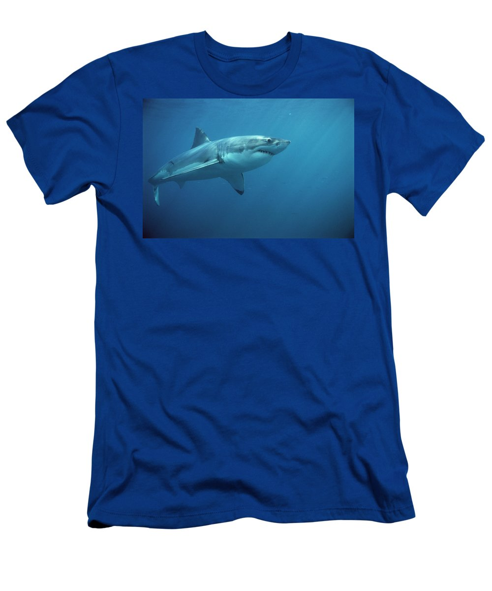 Mp T-Shirt featuring the photograph Great White Shark Carcharodon by Mike Parry