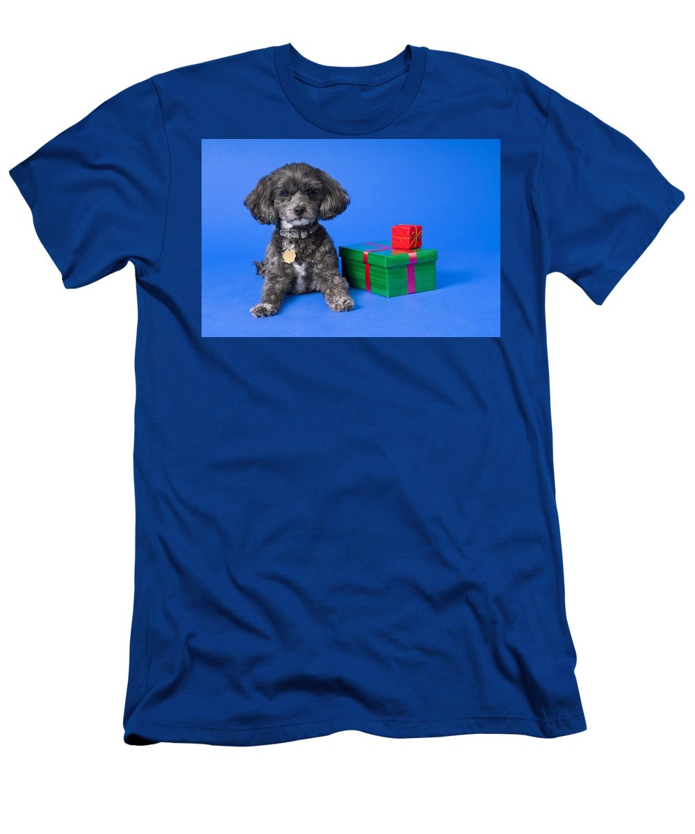 Animal Men's T-Shirt (Athletic Fit) featuring the photograph A Dog With Some Gifts by Corey Hochachka