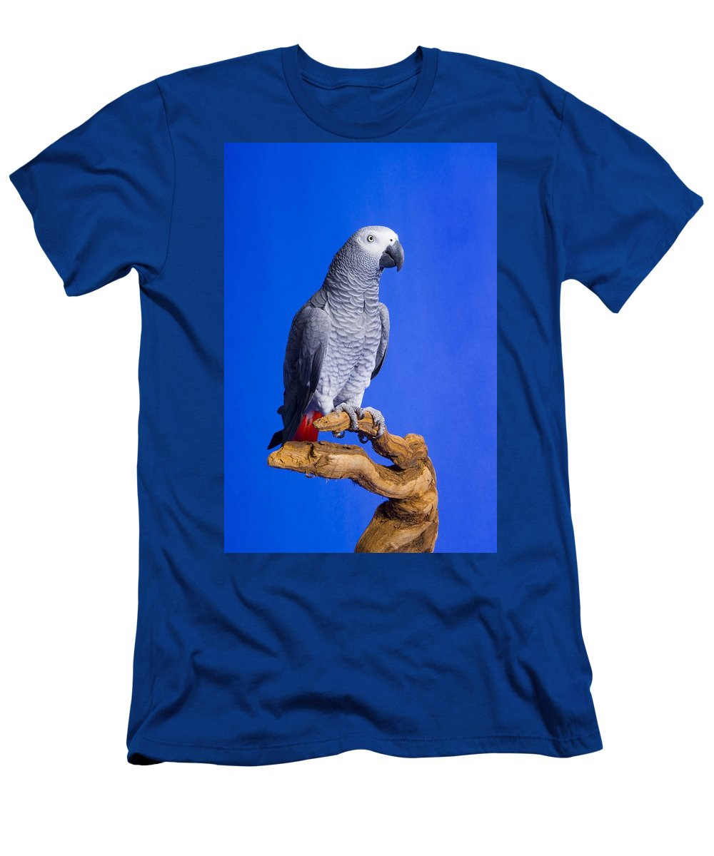Space Men's T-Shirt (Athletic Fit) featuring the photograph African Grey Parrot by Corey Hochachka