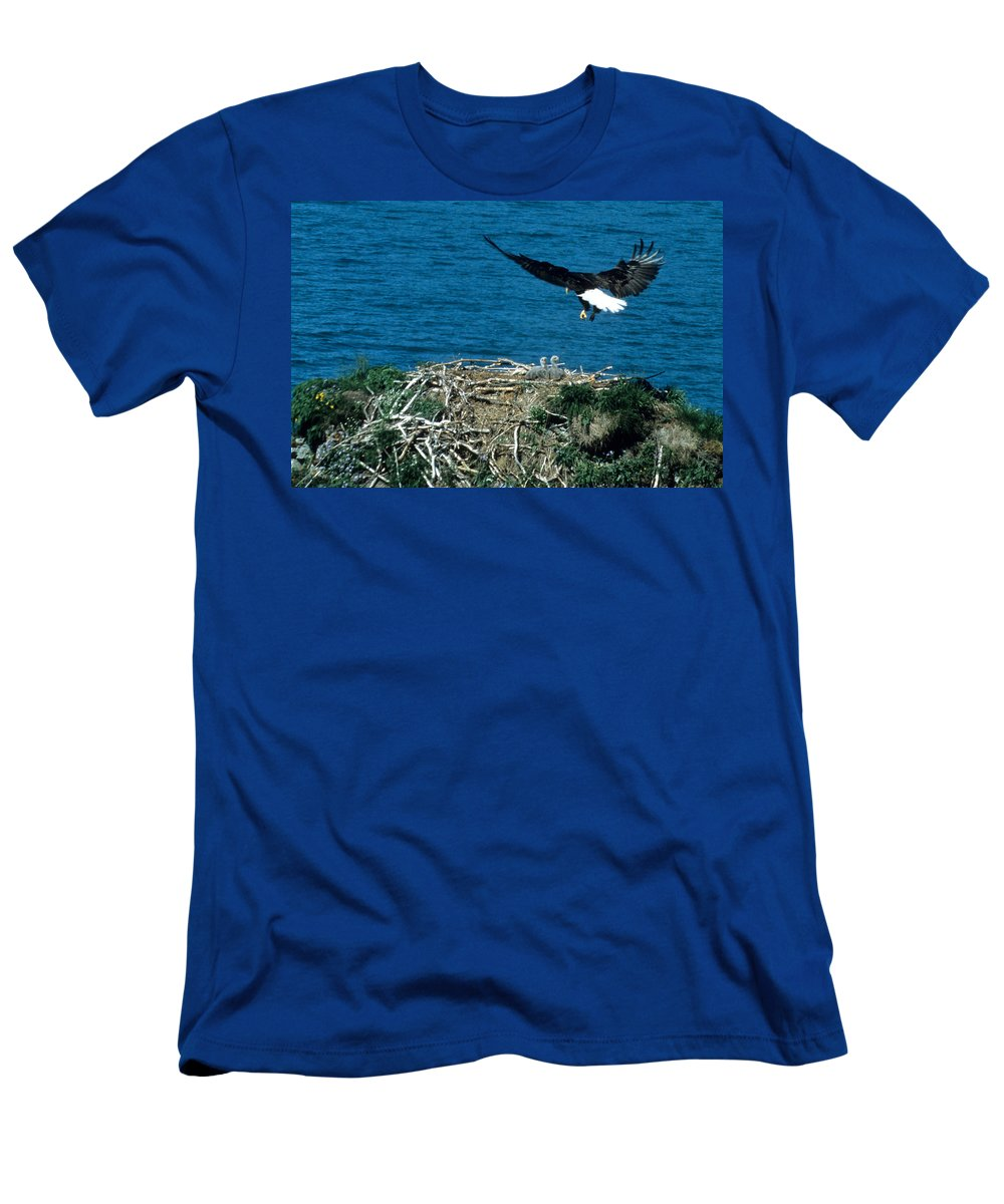 Bald Eagle Men's T-Shirt (Athletic Fit) featuring the photograph Bald Eagle And Chicks by Larry Allan