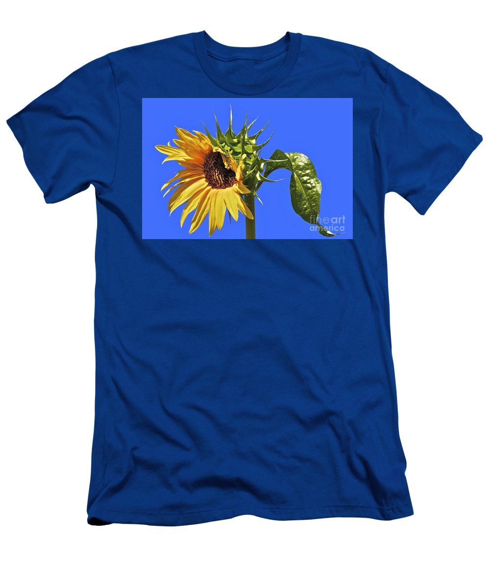 Sunflower Men's T-Shirt (Athletic Fit) featuring the photograph Beautiful Moves In Curves by Gwyn Newcombe