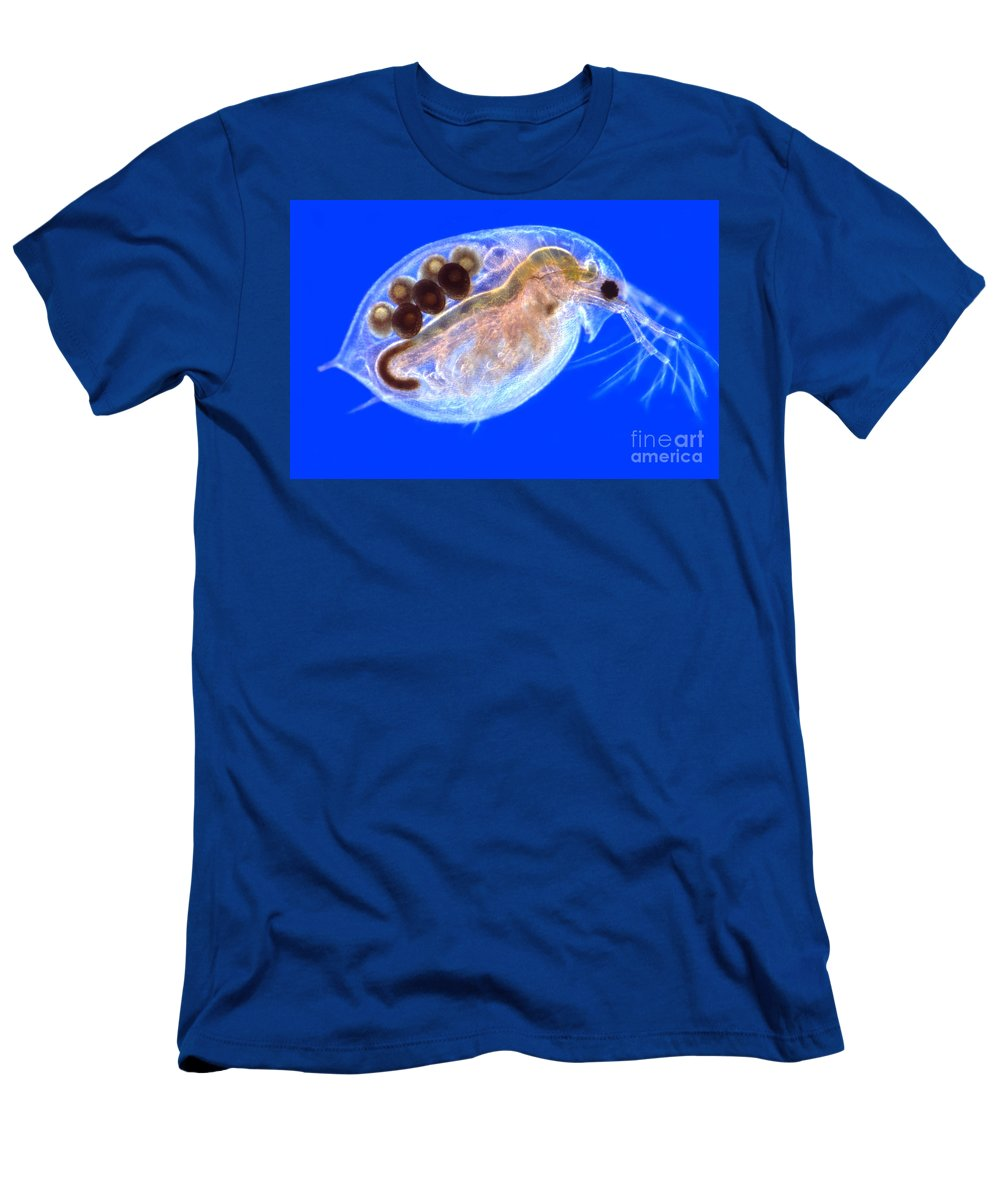 Light Microscopy Men's T-Shirt (Athletic Fit) featuring the photograph Daphnia With Eggs by M. I. Walker