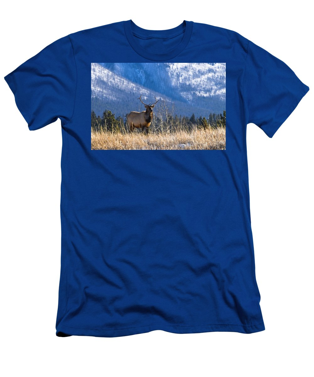 Banff National Park Men's T-Shirt (Athletic Fit) featuring the photograph Elk In Forest, Banff National Park by Philippe Widling