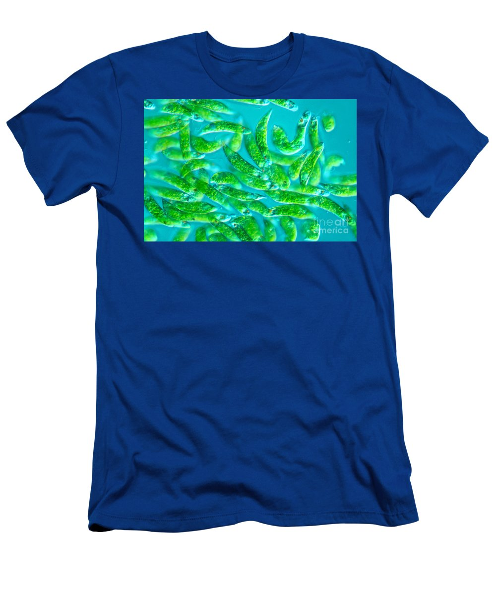 Magnified Men's T-Shirt (Athletic Fit) featuring the photograph Euglena Sp by M. I. Walker