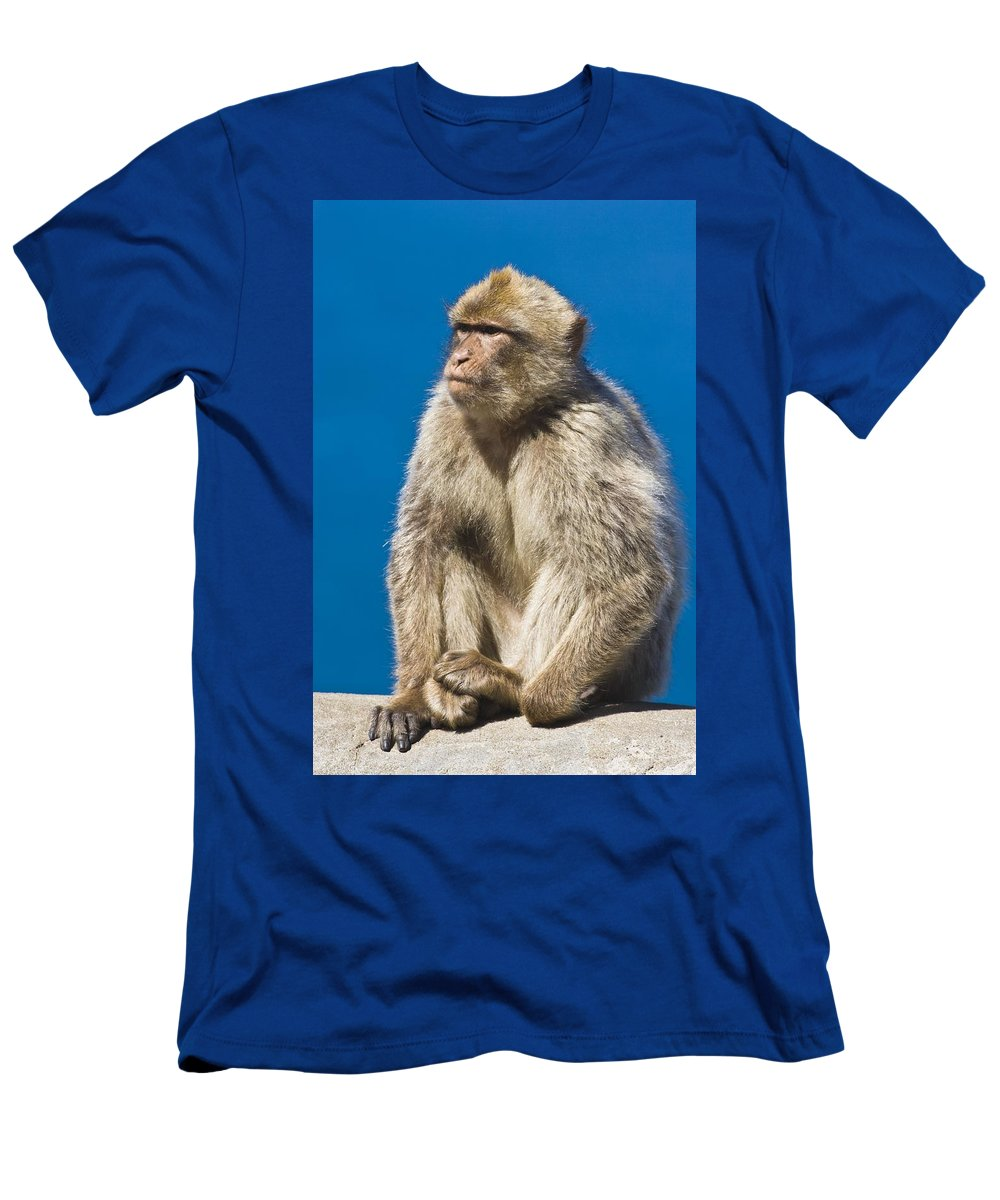 Gibraltarian Men's T-Shirt (Athletic Fit) featuring the photograph Gibraltar Barbary Macaque Macaca by Ken Welsh