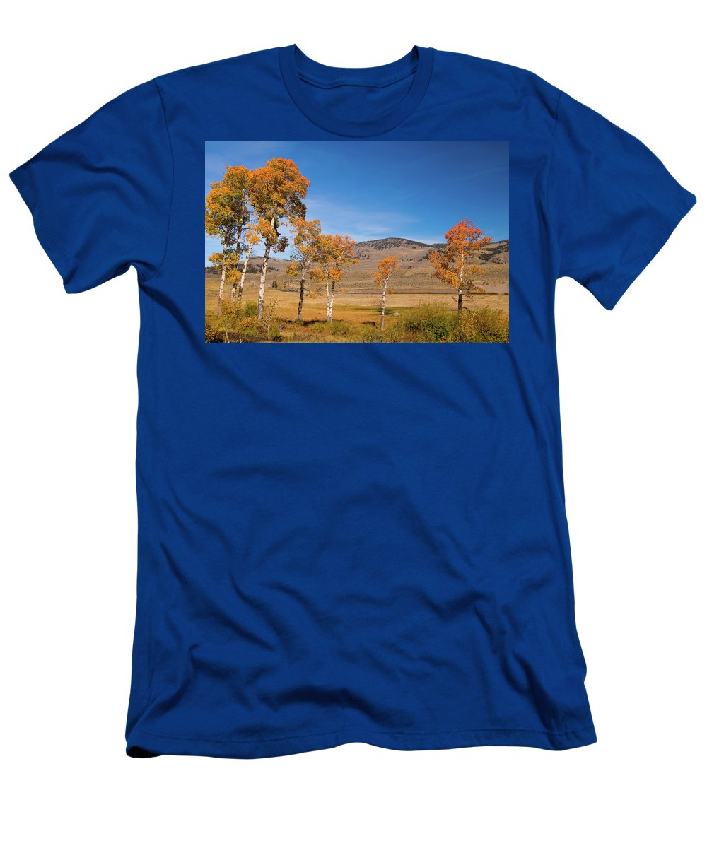 Yellowstone Men's T-Shirt (Athletic Fit) featuring the photograph Lamar Valley Aspens by Steve Stuller