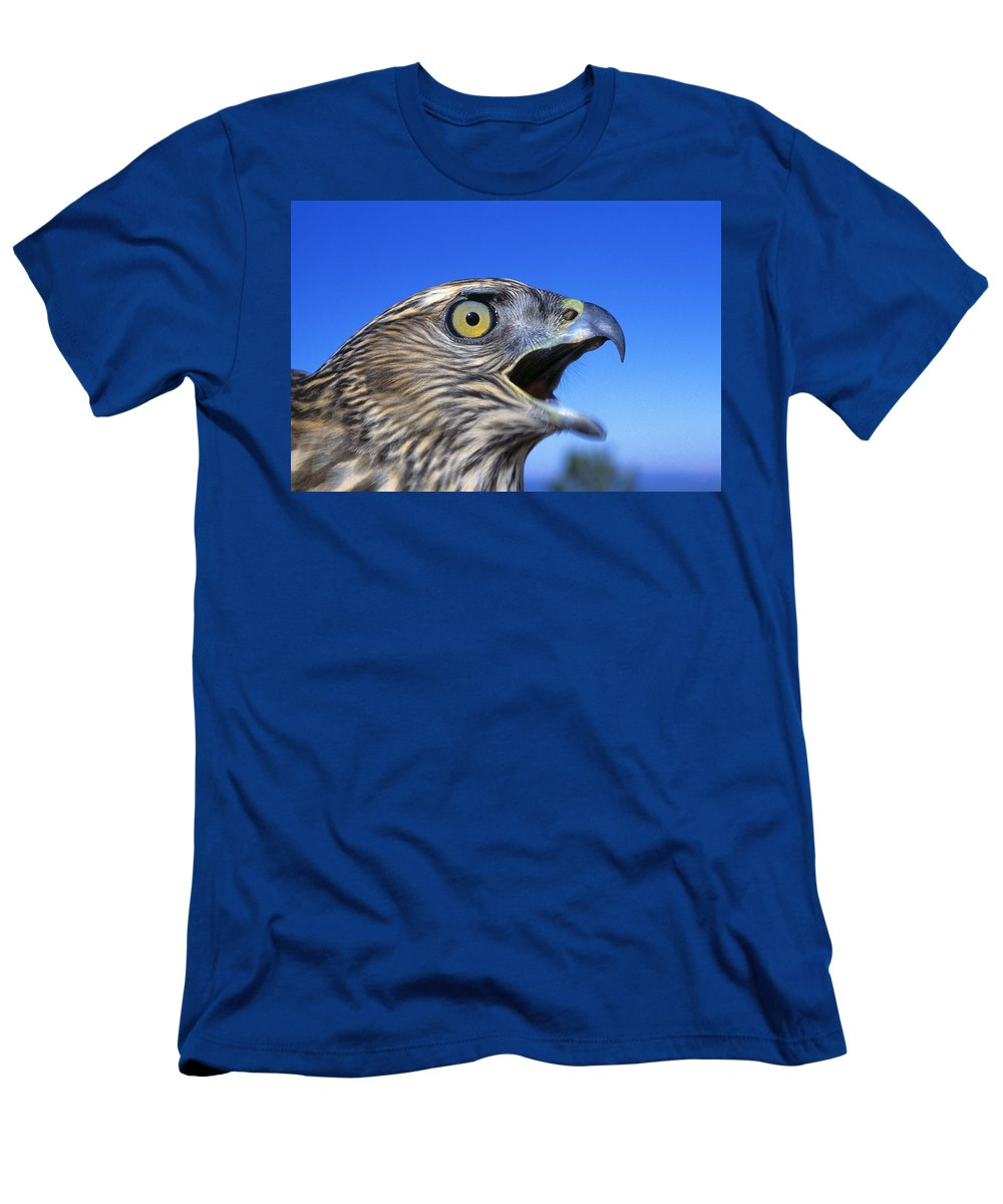 Outdoors Men's T-Shirt (Athletic Fit) featuring the photograph Northern Goshawk With Open Beak by Natural Selection David Ponton