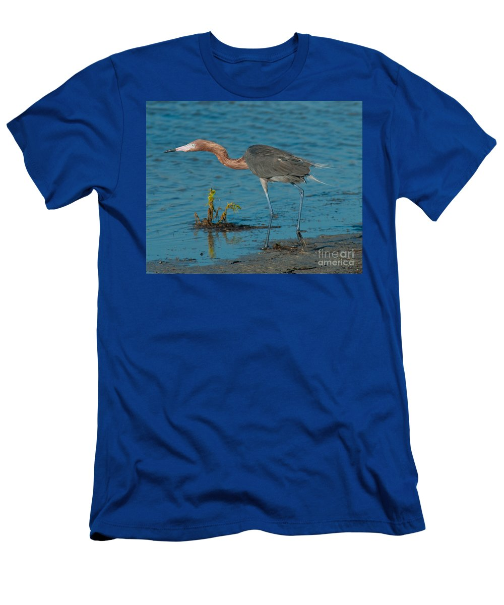 Red Men's T-Shirt (Athletic Fit) featuring the photograph Reddish Egret Hunting by Stephen Whalen