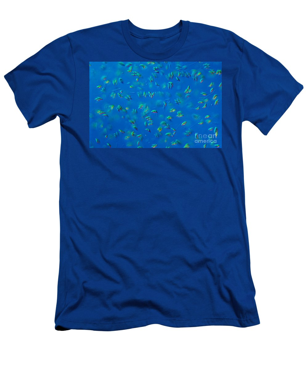 Science Men's T-Shirt (Athletic Fit) featuring the photograph Scenedesmus Sp. Algae, Lm by M. I. Walker