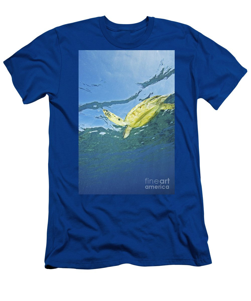 66-csm0245 Men's T-Shirt (Athletic Fit) featuring the photograph Hawaii, Green Sea Turtle by Ron Dahlquist - Printscapes