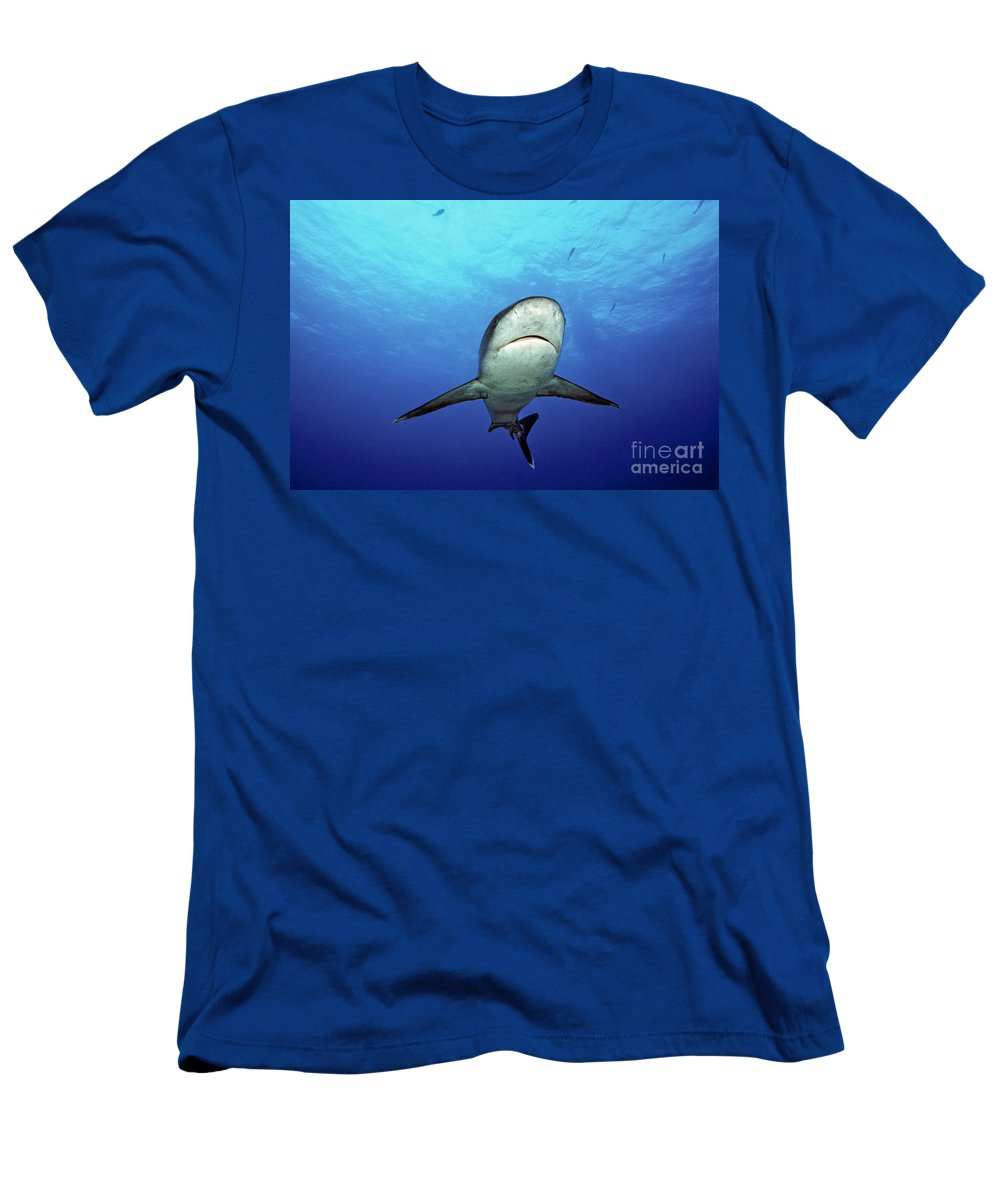 Albimarginatus Men's T-Shirt (Athletic Fit) featuring the photograph Silvertip Shark by Dave Fleetham - Printscapes