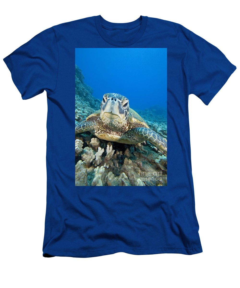 Animal Art Men's T-Shirt (Athletic Fit) featuring the photograph Hawaii, Green Sea Turtle by Dave Fleetham - Printscapes