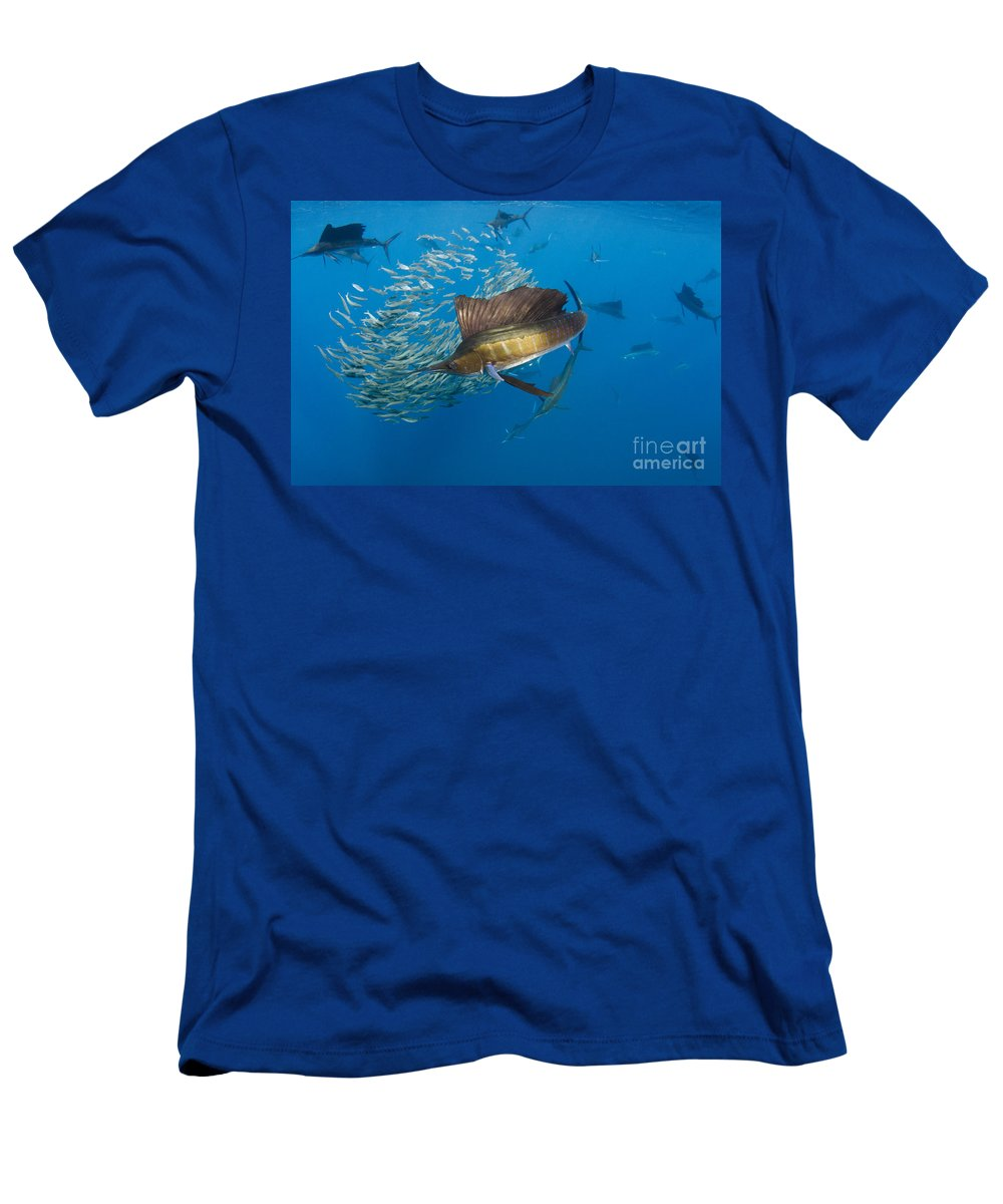 00456229 Men's T-Shirt (Athletic Fit) featuring the photograph Atlantic Sailfish Hunting by Pete Oxford