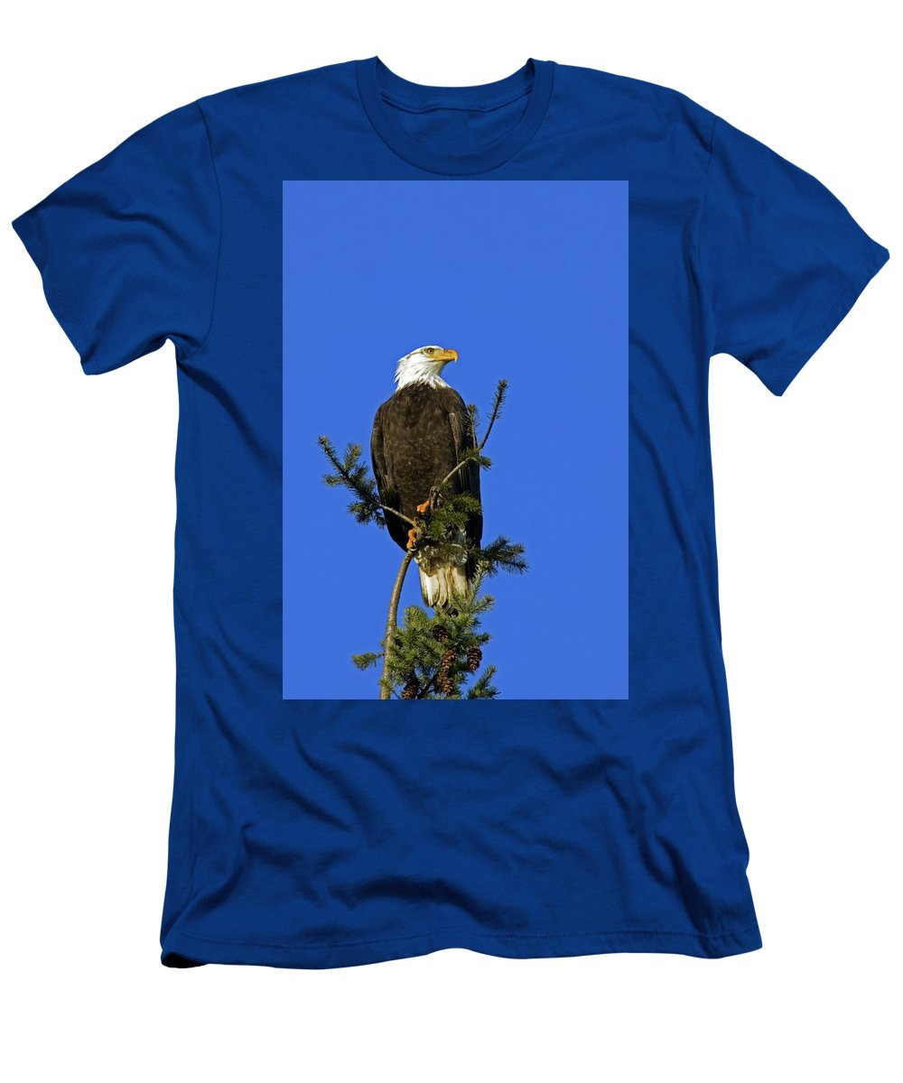 Bald Eagle Men's T-Shirt (Athletic Fit) featuring the photograph Bald Eagle On Blue by Randall Ingalls