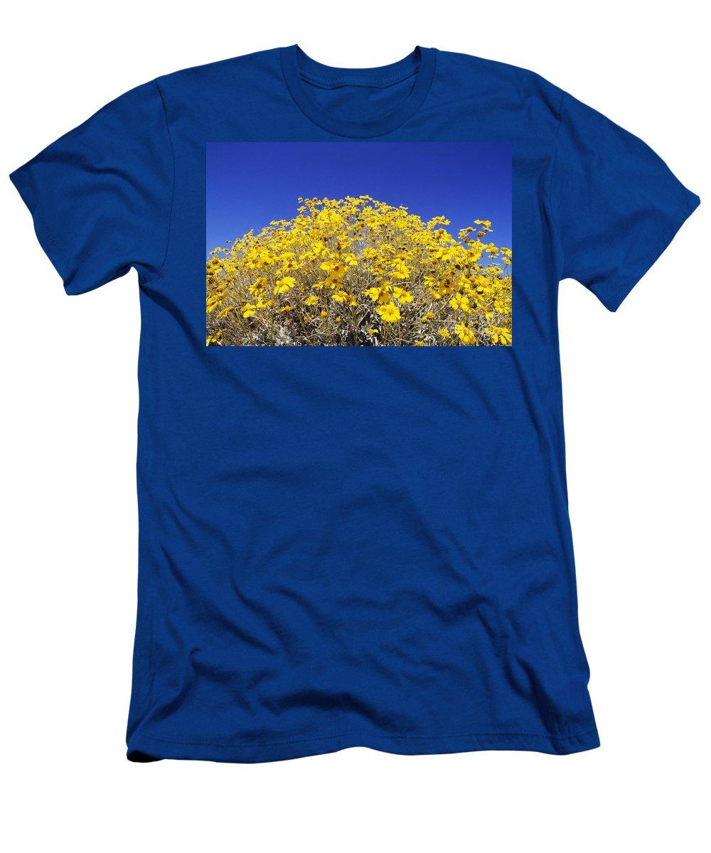 Autumn Men's T-Shirt (Athletic Fit) featuring the photograph Brittlebush by Greg Vaughn - Printscapes