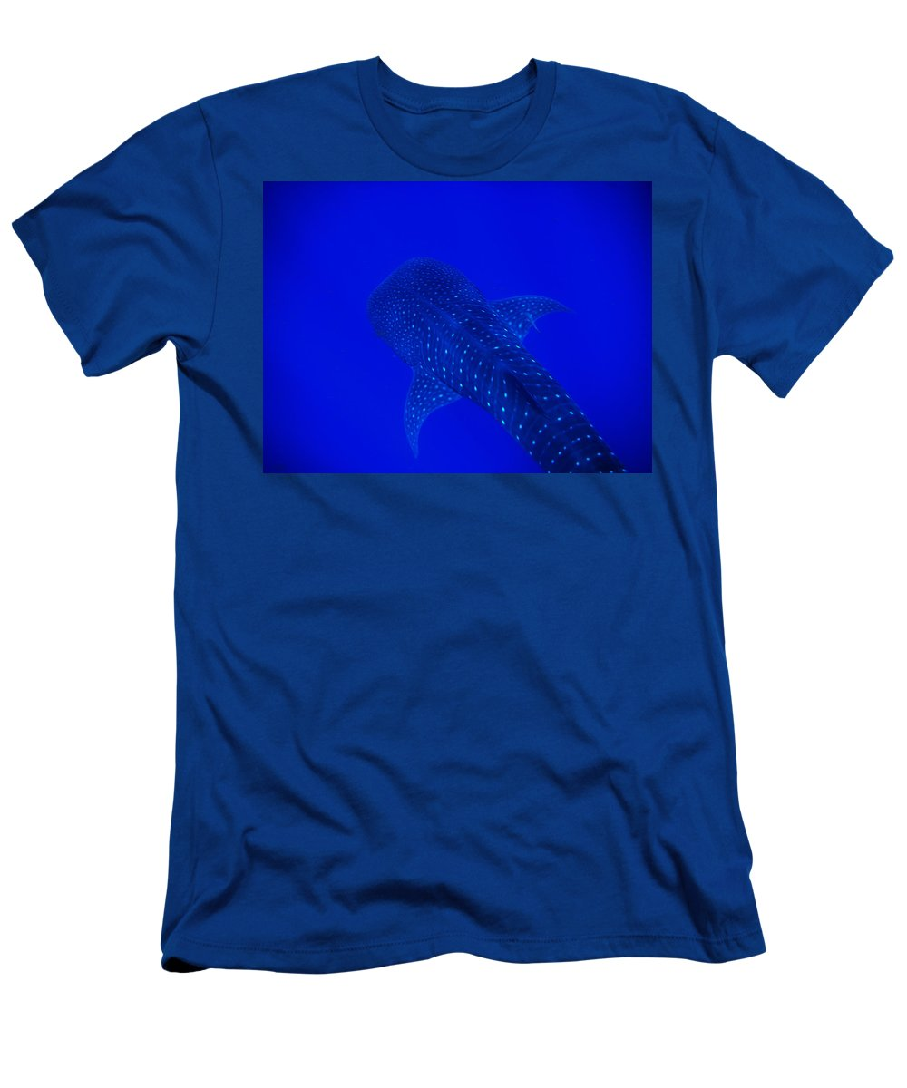 Whale Shark Men's T-Shirt (Athletic Fit) featuring the photograph Cute Little Fishy...... by Strato ThreeSIXTYFive