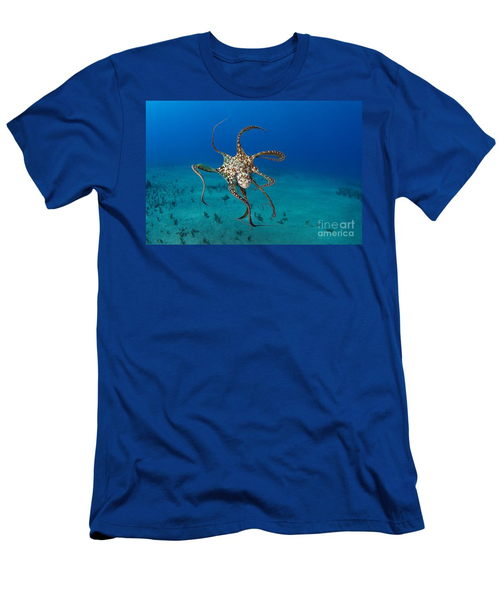 Animal Art Men's T-Shirt (Athletic Fit) featuring the photograph Day Octopus by Dave Fleetham - Printscapes