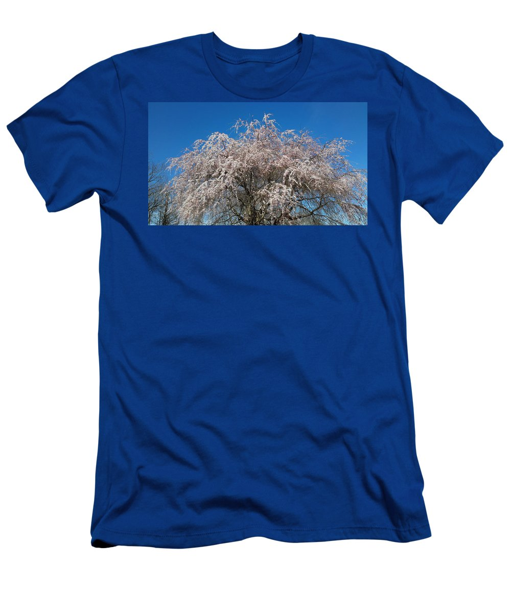 Spring Men's T-Shirt (Athletic Fit) featuring the photograph Flowering Cherry by Joe D Dry