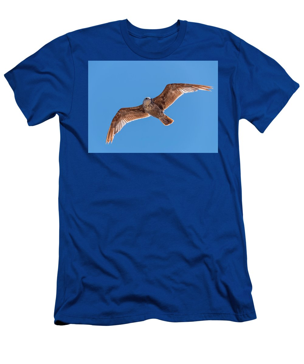 Animal Men's T-Shirt (Athletic Fit) featuring the photograph Flying Gull by Marv Vandehey