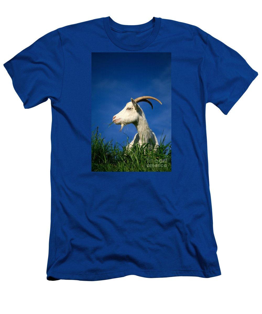 Animals Men's T-Shirt (Athletic Fit) featuring the photograph Goat by Gaspar Avila