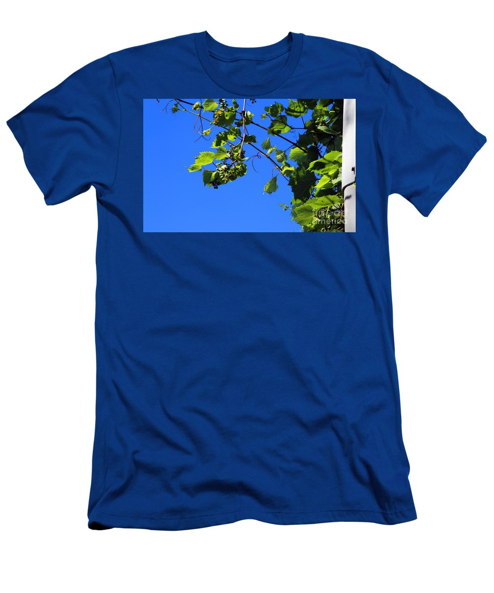 Nature Men's T-Shirt (Athletic Fit) featuring the photograph Hanging Grapes by Don Baker