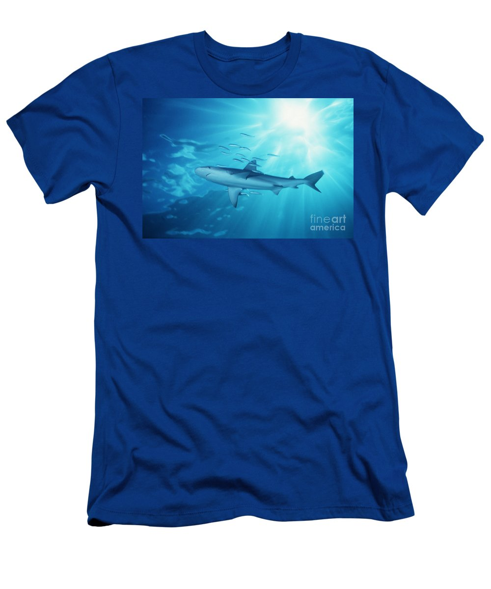 Animal Art Men's T-Shirt (Athletic Fit) featuring the photograph Hawaii Galapagos Shark by Ed Robinson - Printscapes