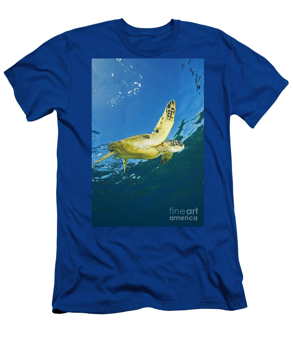 Animal Art Men's T-Shirt (Athletic Fit) featuring the photograph Hawaii, Green Sea Turtle by Ron Dahlquist - Printscapes