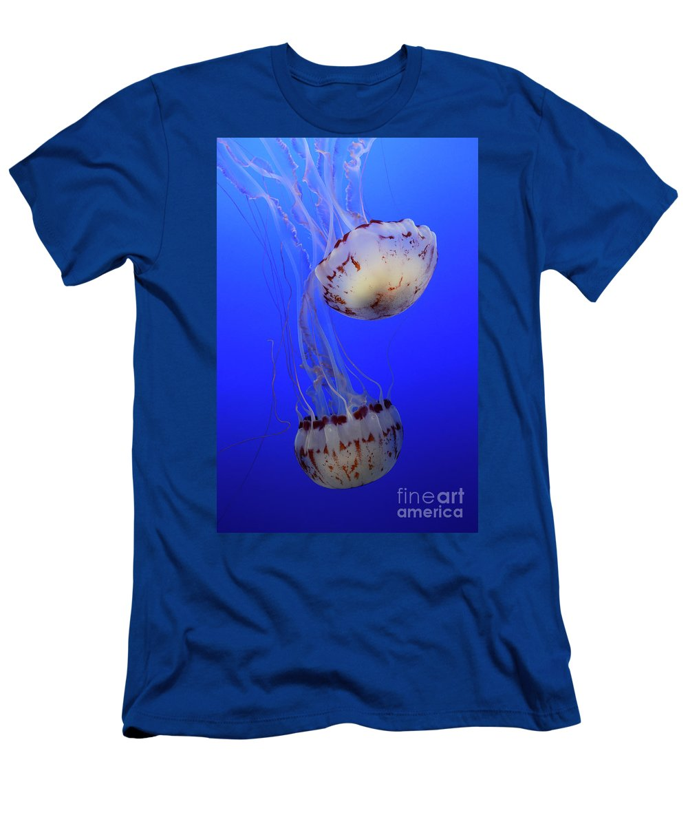 Jellyfish Men's T-Shirt (Athletic Fit) featuring the photograph Jellyfish 1 by Bob Christopher