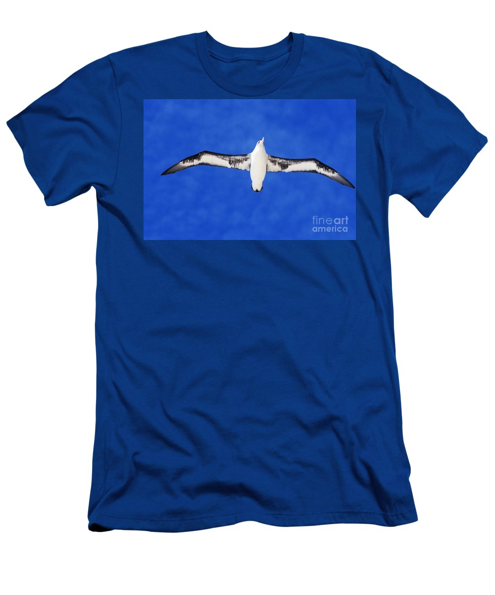 Adult Men's T-Shirt (Athletic Fit) featuring the photograph Laysan Albatross by Ed Robinson - Printscapes