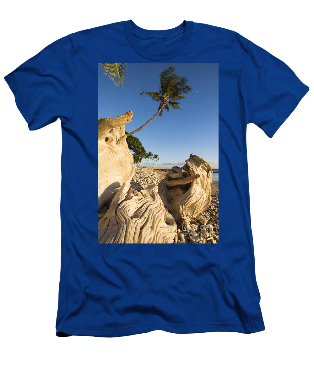 Afternoon Men's T-Shirt (Athletic Fit) featuring the photograph Palm And Driftwood by Ron Dahlquist - Printscapes