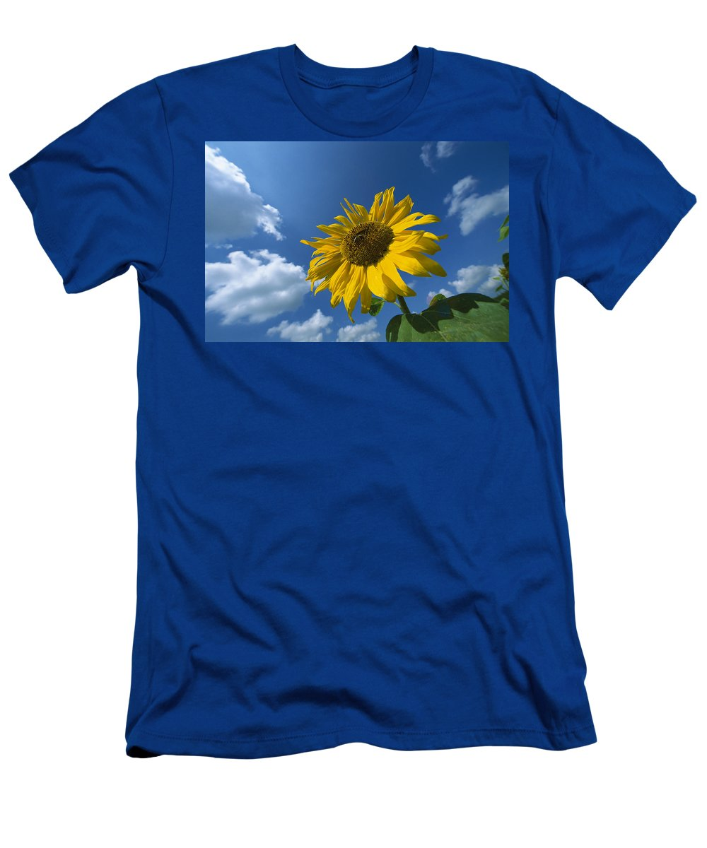 00198043 Men's T-Shirt (Athletic Fit) featuring the photograph Sunflower And Blue Sky by Konrad Wothe