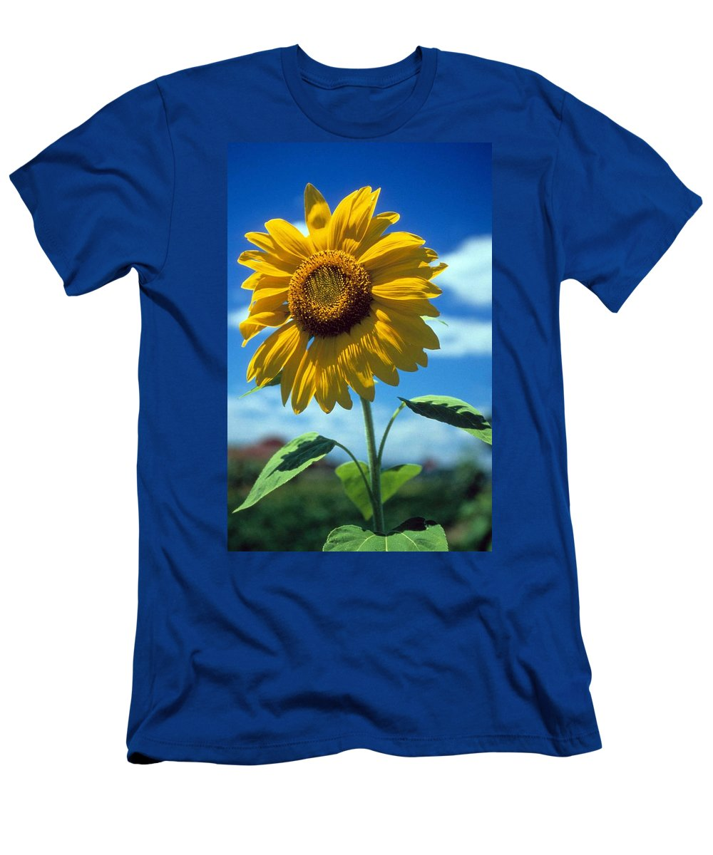 Sussex County Men's T-Shirt (Athletic Fit) featuring the photograph Sussex County Sunflower by Laurie Paci