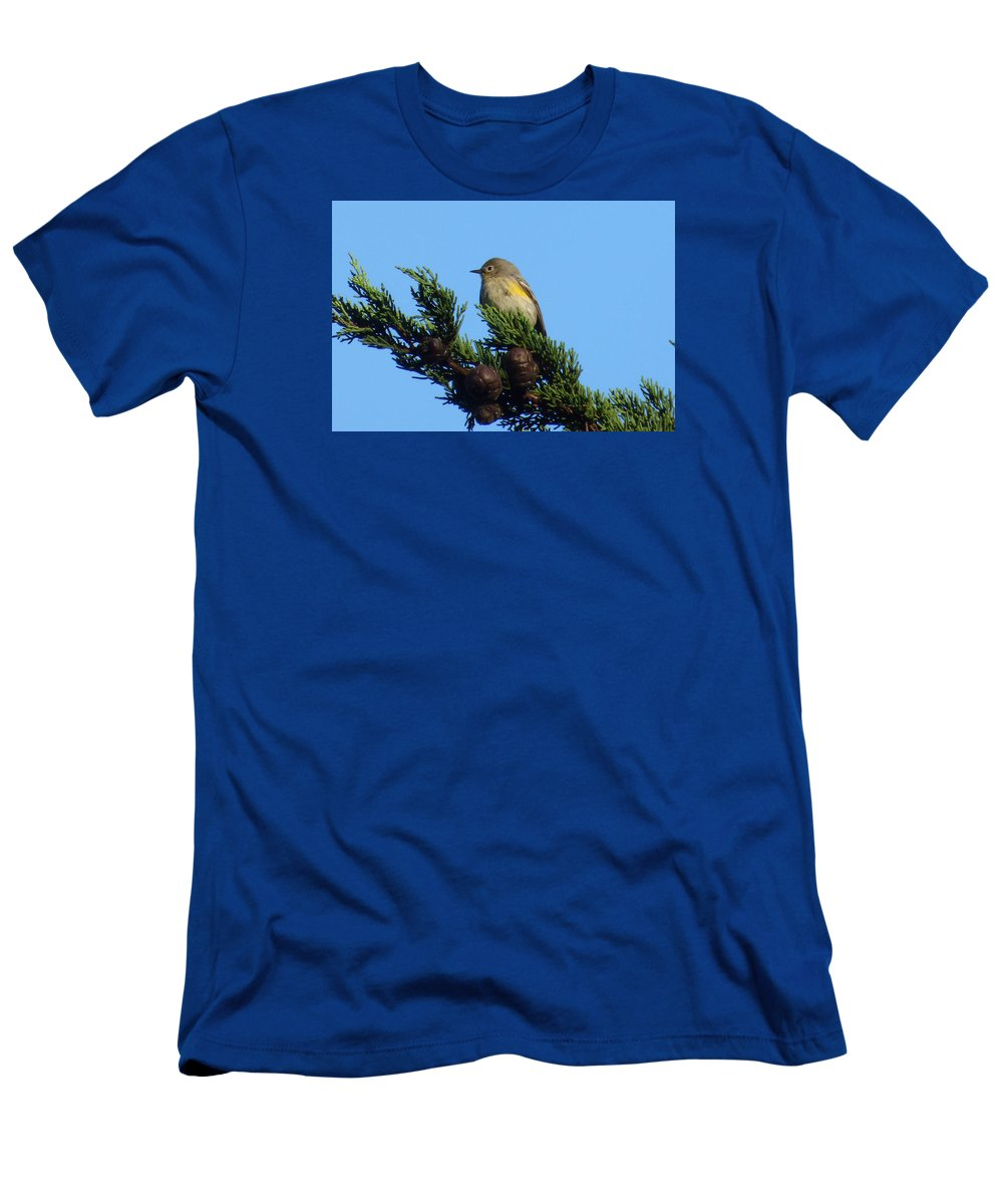 Yellow-rumped Warbler Men's T-Shirt (Athletic Fit) featuring the photograph Yellow-rumped Warbler On Cedar Bough by Andrea Freeman